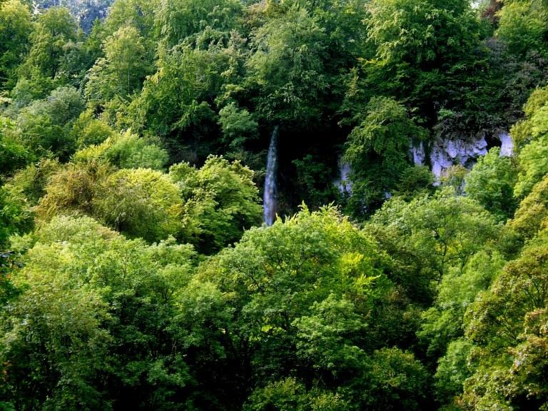 Uracher_Wasserfall_im_Wald